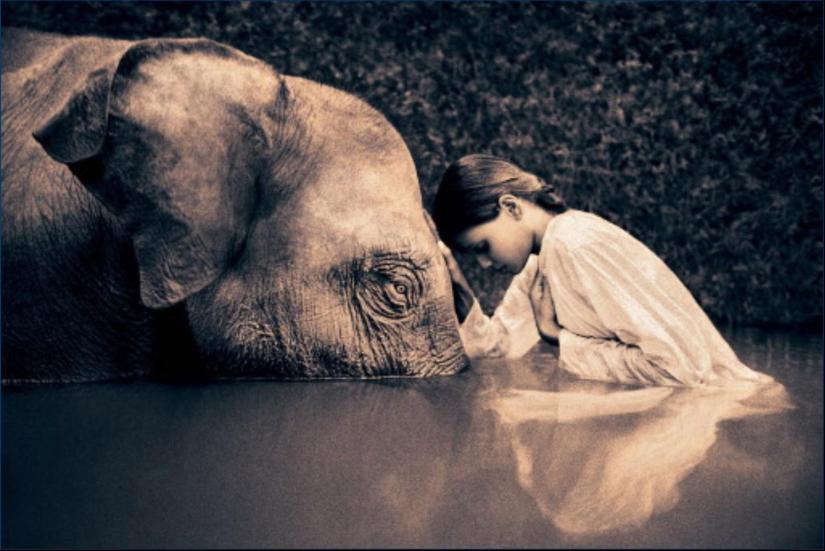 elefante-2-gregory-colbert